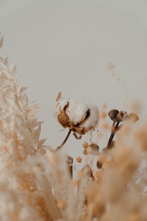 cotone organico moda sostenibile
